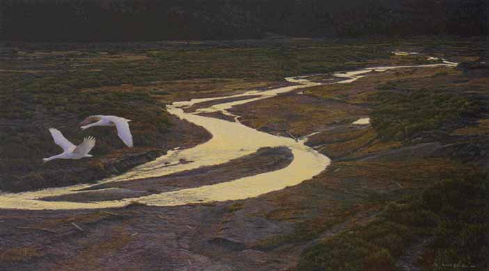 Robert Bateman - Above the River - Trumpeter Swans