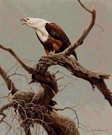Robert Bateman - African Fish Eagle