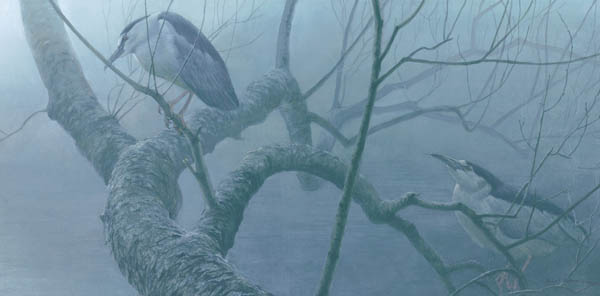 Robert Bateman - Black-Crowned Night Heron Pair
