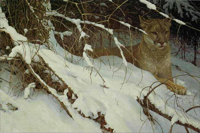 Robert Bateman - Cougar in the Snow