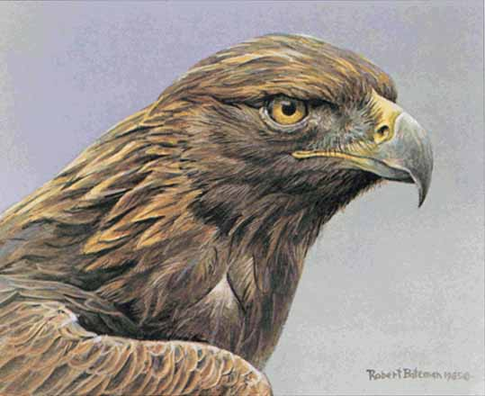 Robert Bateman - Golden Eagle Portrait