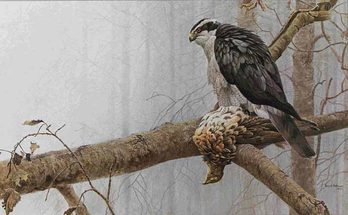 Robert Bateman - Goshawk and Ruffed Grouse