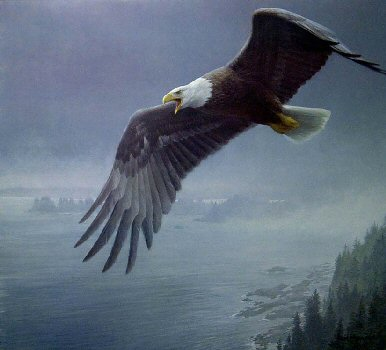 Robert Bateman - On the Wing - Bald Eagle