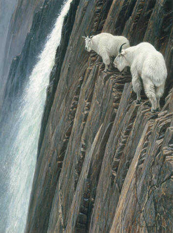 Robert Bateman - Sheer Drop - Mountain Goats