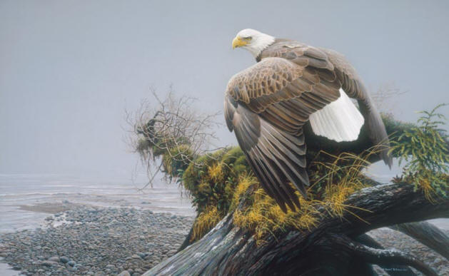 Robert Bateman - Vantage Point