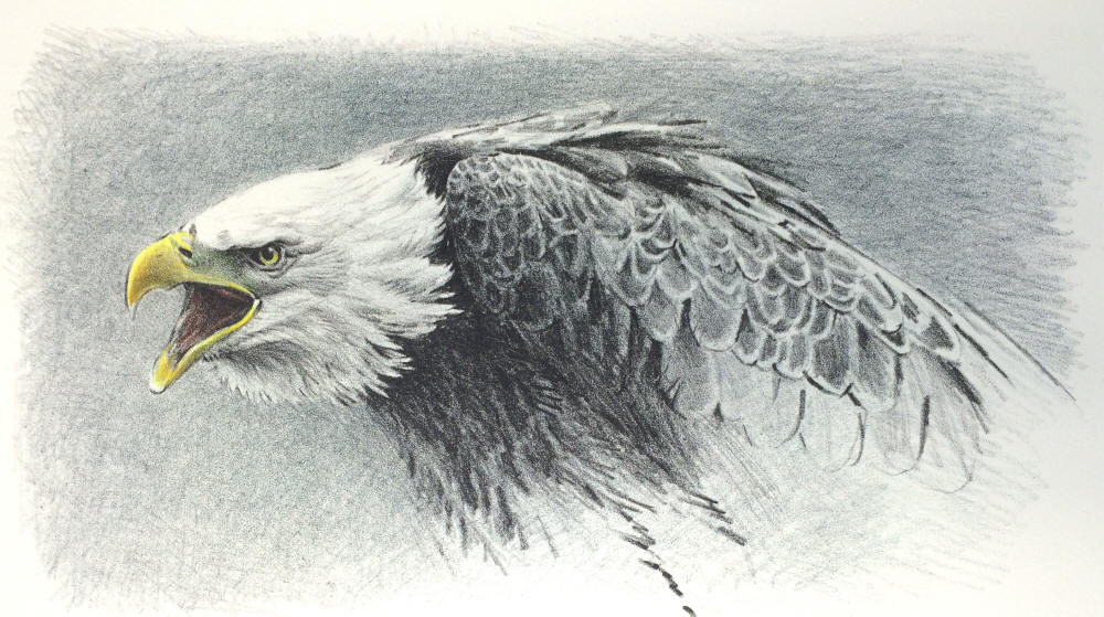 Robert Bateman - Bald Eagle - Hand-Colored Lithograph
