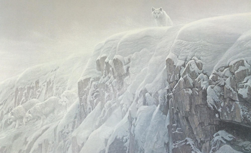 Robert Bateman - Arctic Cliff - White Wolves