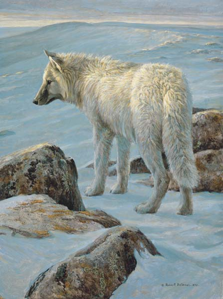 Robert Bateman - Arctic Evening - White Wolf