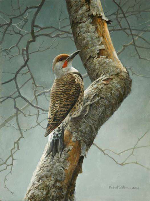 Robert Bateman - Flicker on Apple Tree