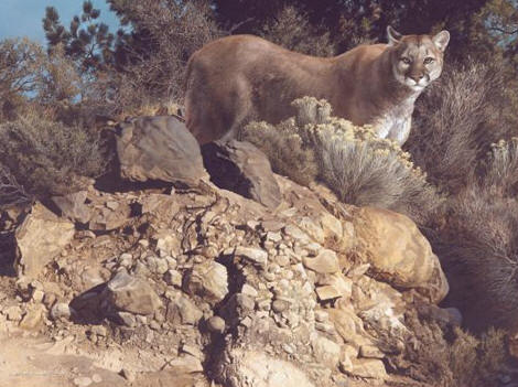 Carl Brenders - Cliff Dweller - Cougar