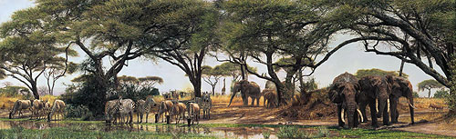 Simon Combes - African Oasis