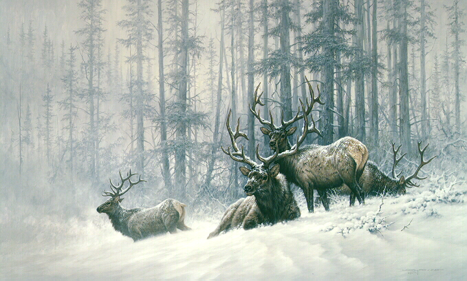 Larry Fanning - Mountain Majesty - Bull Elk