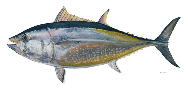 Flick Ford - Bluefin Tuna