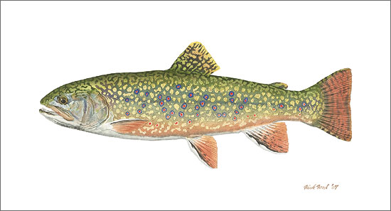 Flick Ford - Pennsylvania Brook Trout