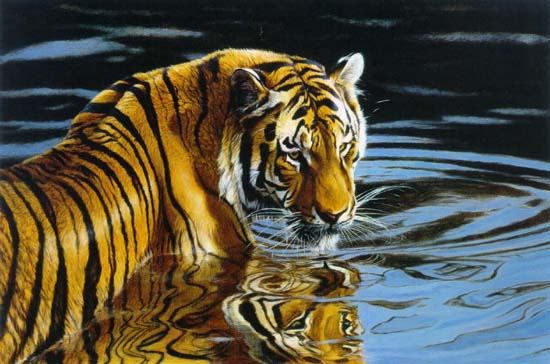 Matthew Hillier - Reflections - Tiger in Water