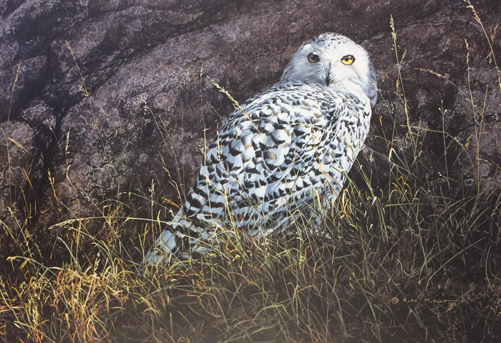 Alan Hunt - Arctic Knight - Snowy Owl