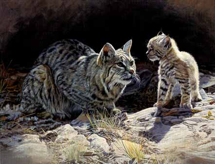 Terry Isaac - The Lesson - Bobcat