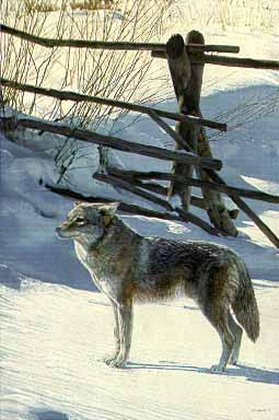 Terry Isaac - Rail Fence - Coyote
