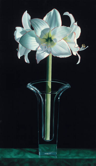 Jane Jones - Grande Amaryllis
