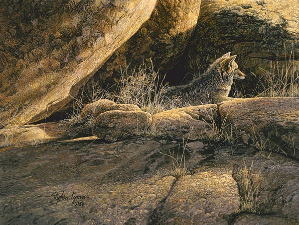 Stephen Lyman - Coyote Afternoon