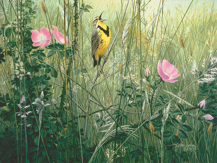 Stephen Lyman - Song of the Meadow
