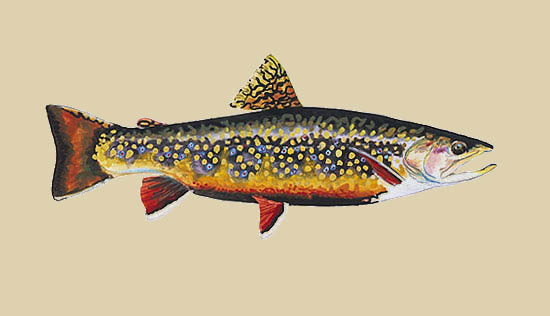 James Prosek - Brook Trout