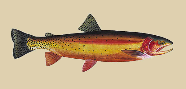 James Prosek - Yellowstone Cutthroat Trout