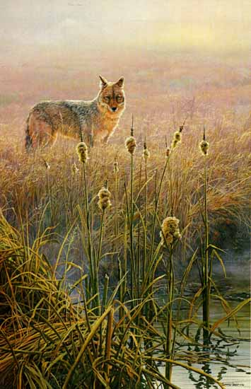 John Seerey-Lester - Dawn on the Marsh - Coyote