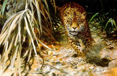 John Seerey-Lester - Into the Clearing - Jaguar