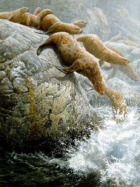 John Seerey-Lester - The Plunge - Northern Sea Lions