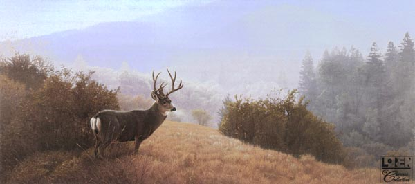 Daniel Smith - Autumn Haze - Mule Deer