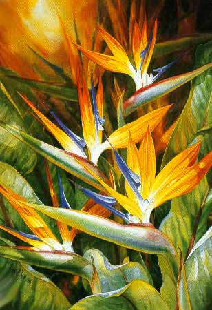 Darryl Trott - Birds of Paradise