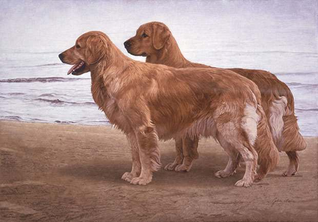 John Weiss - Goldens at the Shore