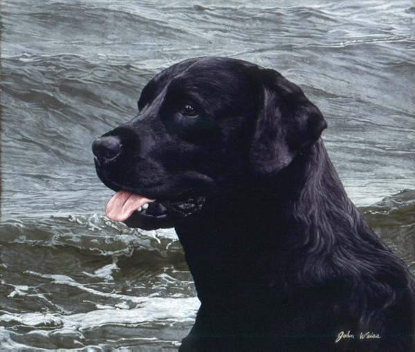 John Weiss - Of the Finest Breed - Black Lab