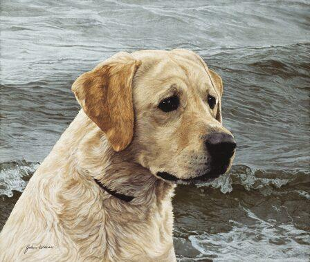 John Weiss - Of the Finest Breed - Yellow Lab